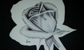 Click for Rose in charcoal page